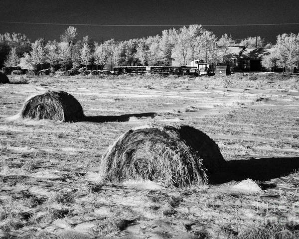 Frozen Poster featuring the photograph frozen snow covered hay bales in a field Forget Saskatchewan Canada by Joe Fox