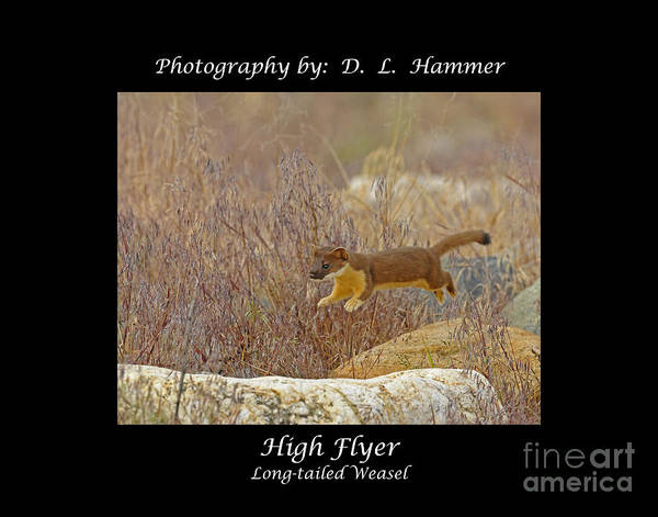 Wildlife Poster featuring the photograph High Flyer by Dennis Hammer