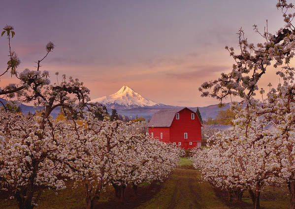 Sunrise Poster featuring the photograph Hood River Sunrise by Darren White