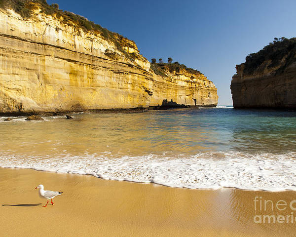 Australia Poster featuring the photograph Loch Ard Gorge by Tim Hester