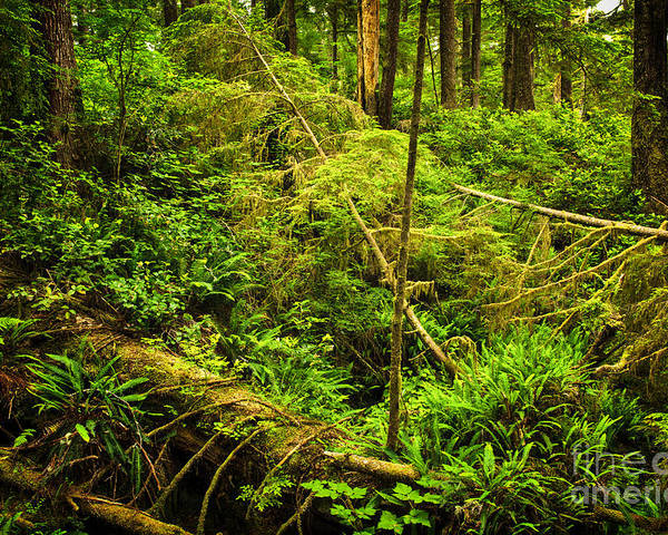 Rainforest Poster featuring the photograph Lush Temperate Rainforest by Elena Elisseeva