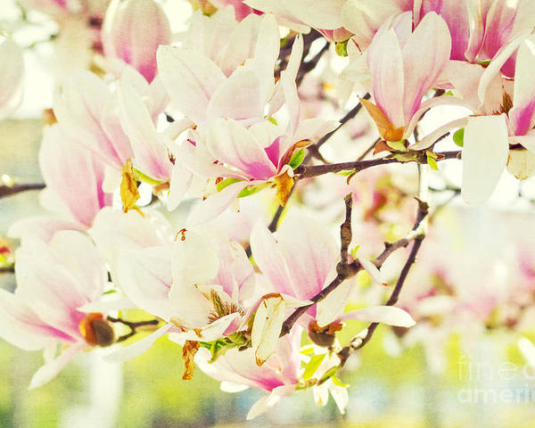 Magnolia Poster featuring the photograph Magnolia by Angela Doelling AD DESIGN Photo and PhotoArt