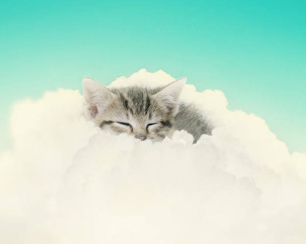 Kitten Poster featuring the photograph On Cloud Nine by Amy Tyler