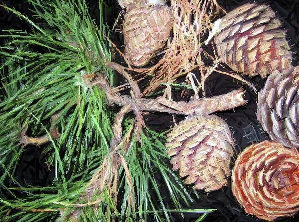Pine Poster featuring the photograph Pitch Pine Cone by Susan Carella
