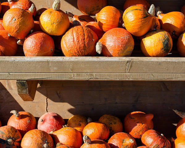 Pumpkin Poster featuring the photograph Pumpkins For Sale by Frank Gaertner