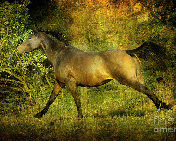 Horses Poster featuring the photograph Running Free by Angel Ciesniarska