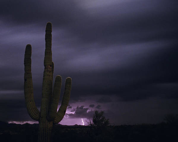 American Southwest Poster featuring the photograph Saguaro Cactus Sunset At Dusk With Lightning Arizona State Usa by Jim Corwin