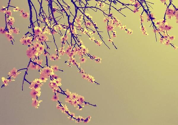 Sakura Poster featuring the photograph Sakura by Marianna Mills