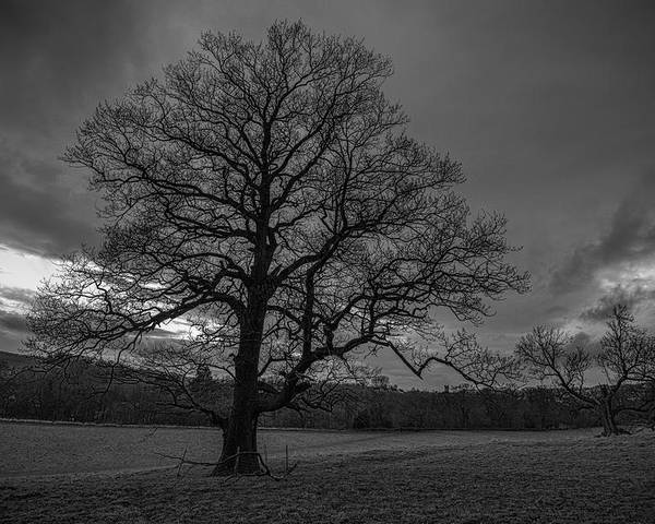 Trees Poster featuring the photograph Scottish Sunset by Jason Lanier
