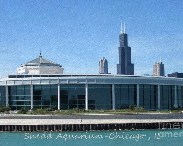 Chicago Poster featuring the photograph Shedd Aquarium by Kathie Chicoine