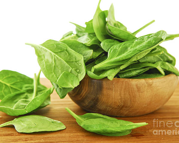Spinach Poster featuring the photograph Spinach by Elena Elisseeva