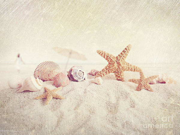 Aquatic Poster featuring the photograph Starfish And Seashells At The Beach by Sandra Cunningham