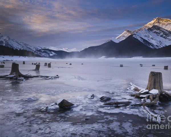 Ice Poster featuring the photograph Stumps At Spray Lakes by Ginevre Smith