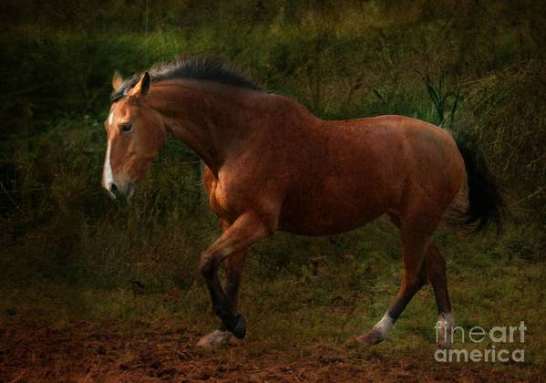 Horse Poster featuring the photograph The Bay Horse by Angel Ciesniarska