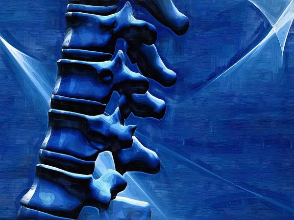 Thoracic Spine Poster featuring the photograph Thoracic Spine by Joseph Ventura