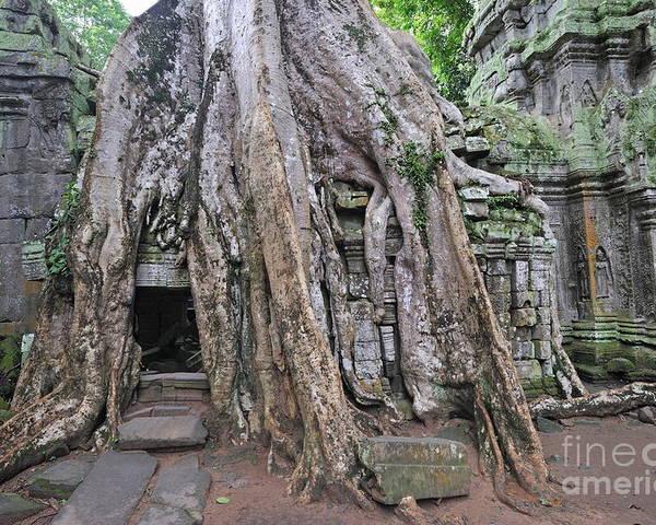 Angkor Poster featuring the photograph Tree Roots On Ruins At Angkor Wat by Sami Sarkis