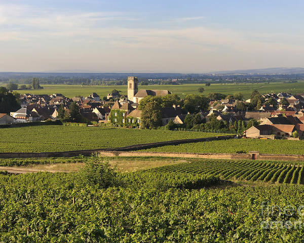 Agriculture Poster featuring the photograph Vineyard And Village Of Pommard. Cote D'or. Route Des Grands Crus. Burgundy. France. Europe by Bernard Jaubert
