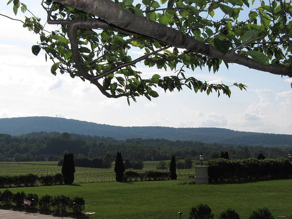 Virginia Poster featuring the photograph Vineyards In Va - 12125 by DC Photographer