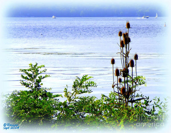 Waterscape Poster featuring the photograph Waters Edge by Rennae Christman
