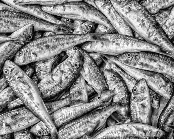 Fish Market Poster featuring the photograph Tile Of Fishes by Dobromir Dobrinov