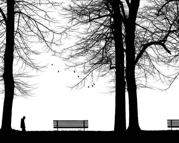 Bench Poster featuring the photograph Untitled by Massimo Della Latta