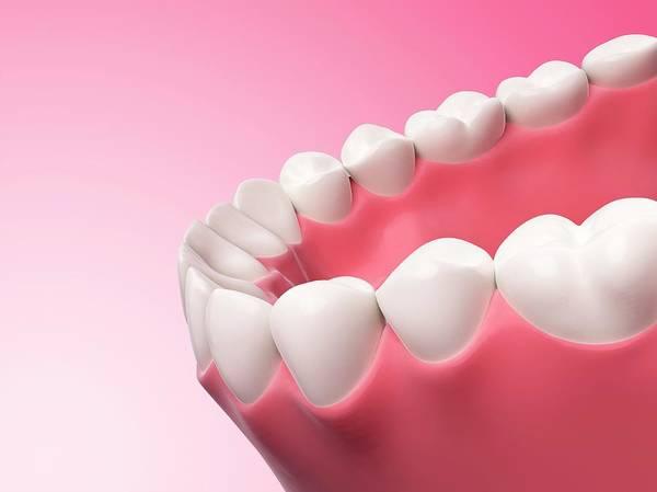 Artwork Poster featuring the photograph Human Teeth by Sebastian Kaulitzki