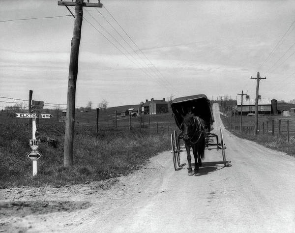 Photography Poster featuring the photograph 1920s 1930s Amish Man Driving Buggy by Vintage Images