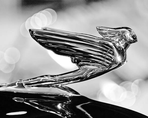 1938 Cadillacv-16 Hood Ornament Poster featuring the photograph 1938 Cadillacv-16 Hood Ornament by Jill Reger
