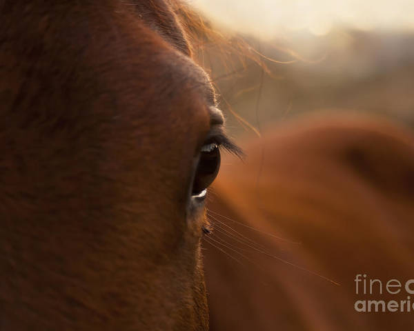 Australia Poster featuring the photograph Horse by Tim Hester