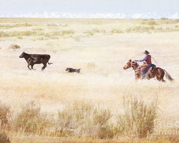 Cowboy Poster featuring the photograph Round Up by Cindy Singleton