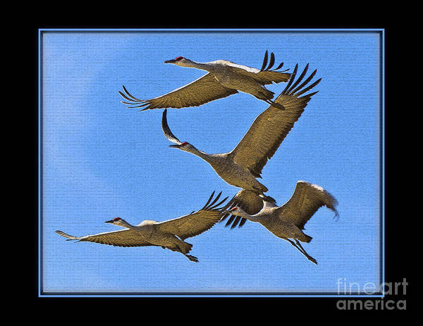 Bird Poster featuring the photograph Sandhill Cranes In Flight by Larry White