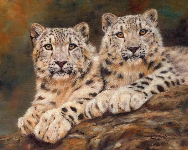 Snow Leopards Poster featuring the painting Snow Leopards by David Stribbling
