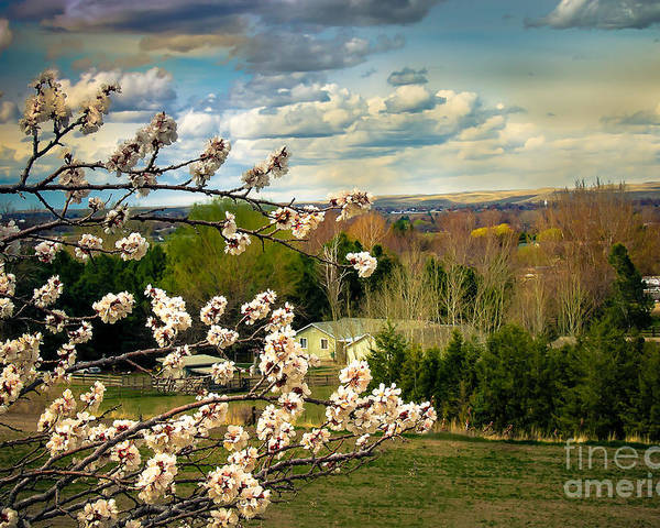 Gem County Poster featuring the photograph Spring Time by Robert Bales