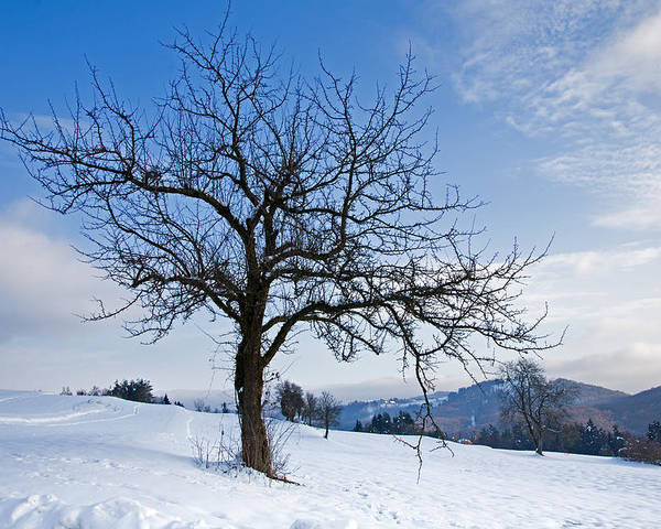 Trees Poster featuring the photograph Winter Landscapes by Ian Middleton