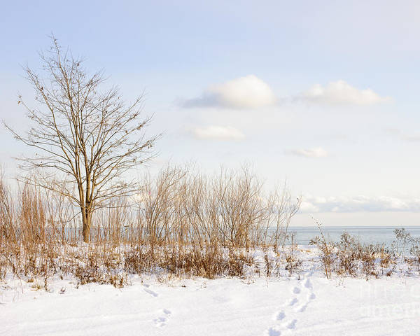 Tree Poster featuring the photograph Winter Shore Of Lake Ontario by Elena Elisseeva