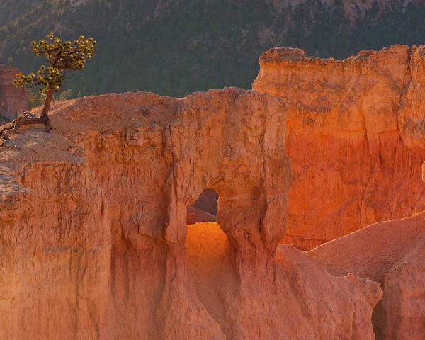 Arid Poster featuring the photograph Usa, Utah, Bryce Canyon National Park by Jaynes Gallery