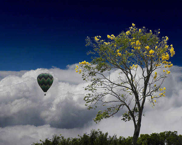 Trees Poster featuring the photograph 2492 by Peter Holme III