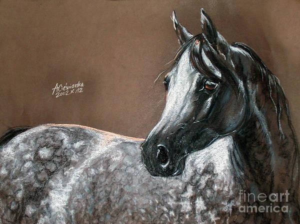 Horses Poster featuring the pastel Arabian Horse by Angel Tarantella