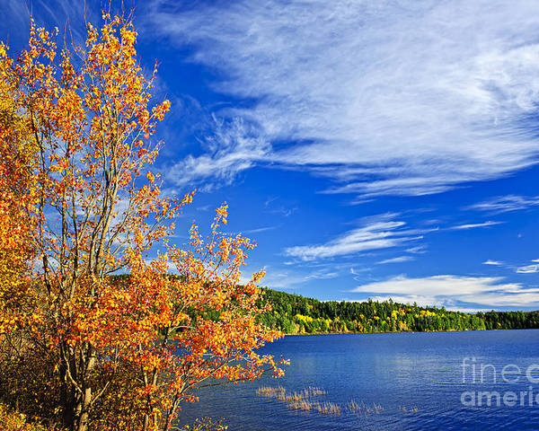 Lake Poster featuring the photograph Fall Forest And Lake by Elena Elisseeva