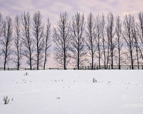 Landscape Poster featuring the photograph Rural Winter Landscape by Elena Elisseeva