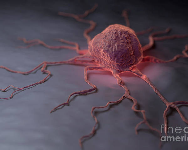 Digitally Generated Image Poster featuring the photograph Cancer Cell by Science Picture Co