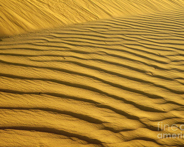 Dunes Poster featuring the photograph Desert Sand Dune by Ezra Zahor