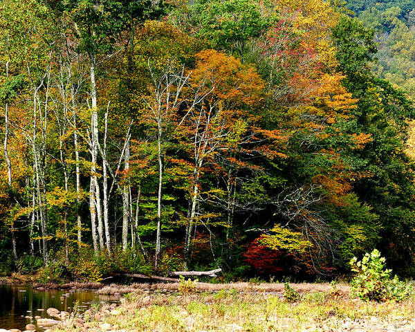 Williams River Poster featuring the photograph Fall Color Williams River by Thomas R Fletcher