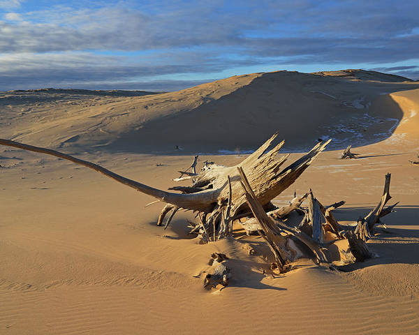 Beautiful Poster featuring the photograph Silver Lake Sand Dunes by Dean Pennala