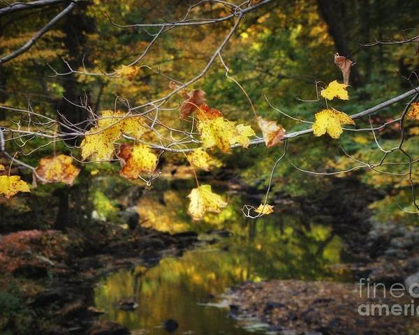 Poster featuring the photograph Autumn 2013 by Chet B Simpson