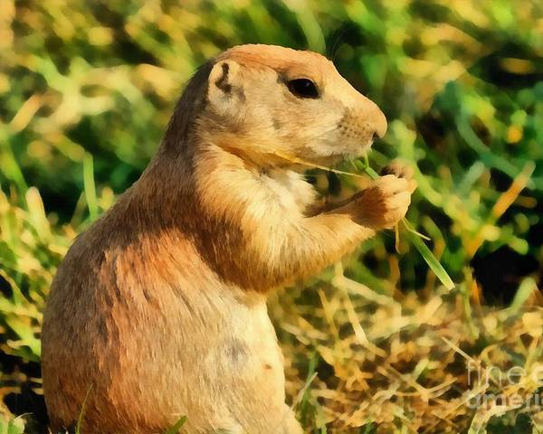 Black-tailed Prairie Dog Poster featuring the painting Black-tailed Prairie Dog by George Atsametakis