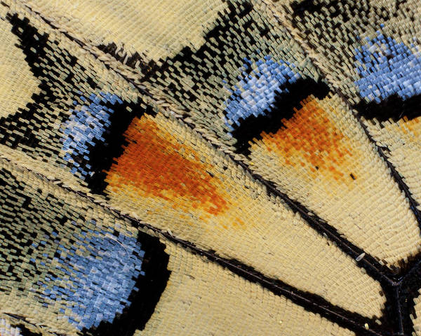 Abstract Poster featuring the photograph Close-up Detail Wing Pattern by Darrell Gulin