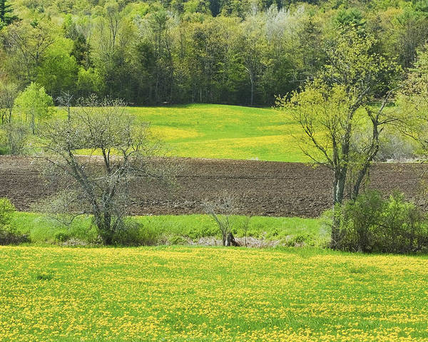 Spring Poster featuring the photograph Spring Farm Landscape With Dandelion Bloom In Maine by Keith Webber Jr
