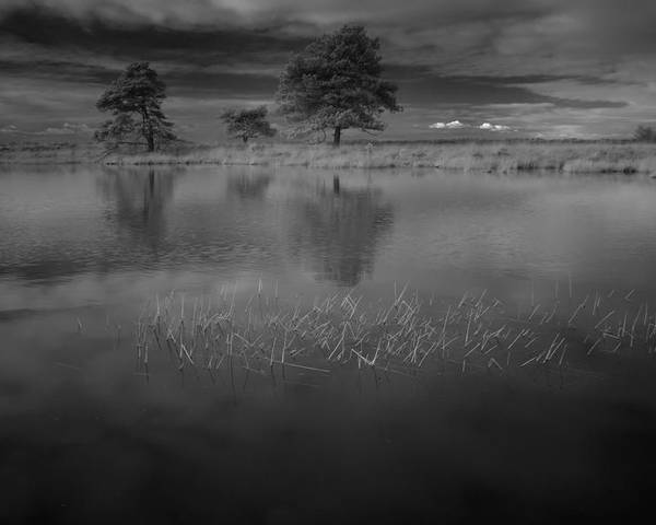 Infrared Poster featuring the photograph Infrared Picture Of The Nature Area Dwingelderveld In Netherlands by Ronald Jansen