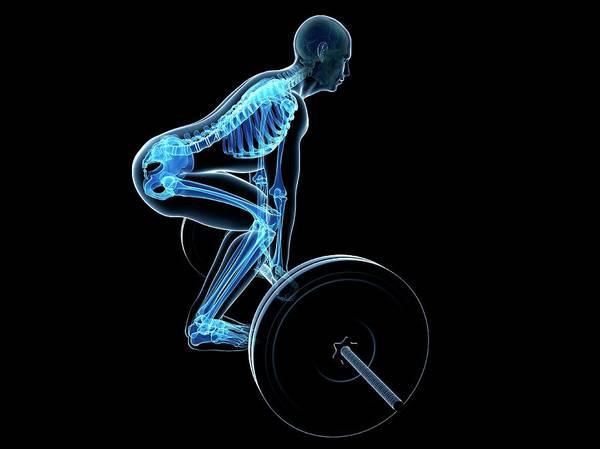 Artwork Poster featuring the photograph Weight Training Posture by Sebastian Kaulitzki